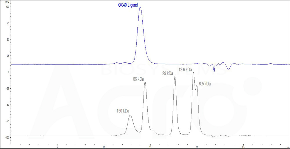 Human OX40 Ligand, His Tag (active trimer) (HPLC-verified) (Cat. No. OXL-H52Q8) HPLC images