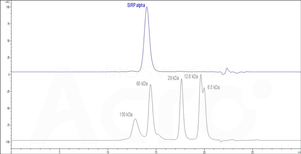 Human SIRP alpha (HPLC-verified), His Tag (Cat. No. SIA-H5225) HPLC images